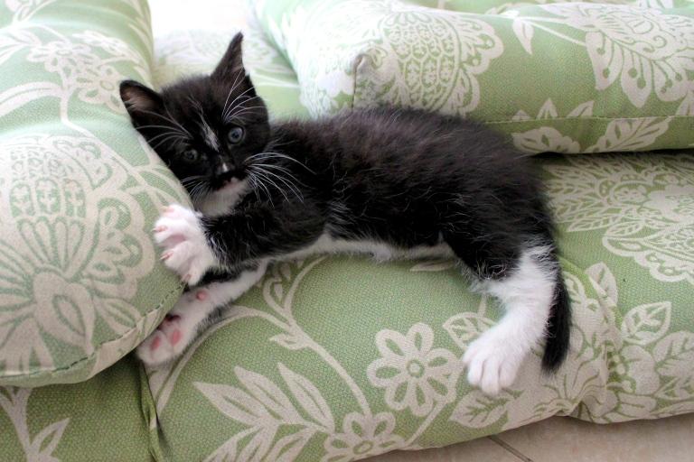 summer-2016-kittens-16