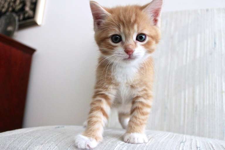 summer-2016-kittens-18