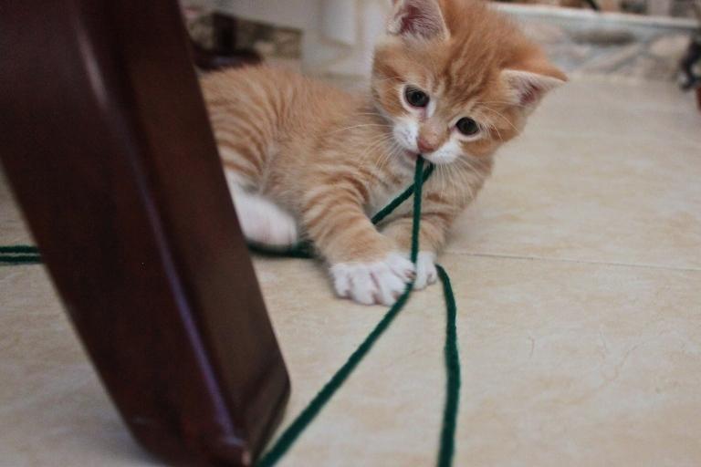 summer-2016-kittens-21