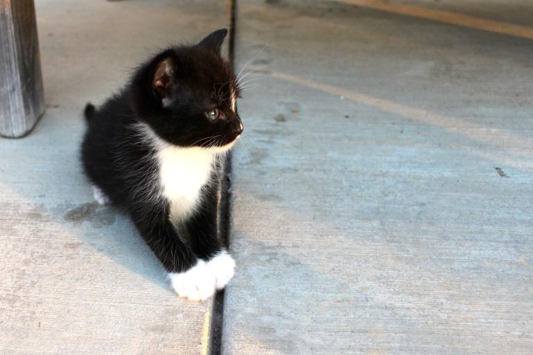 summer-2016-kittens-24