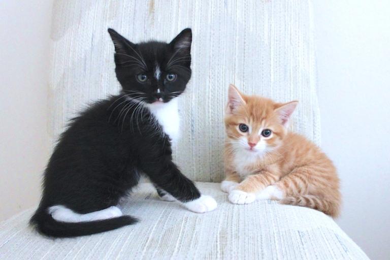 summer-2016-kittens-3
