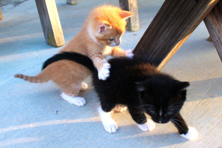 summer-2016-kittens-30