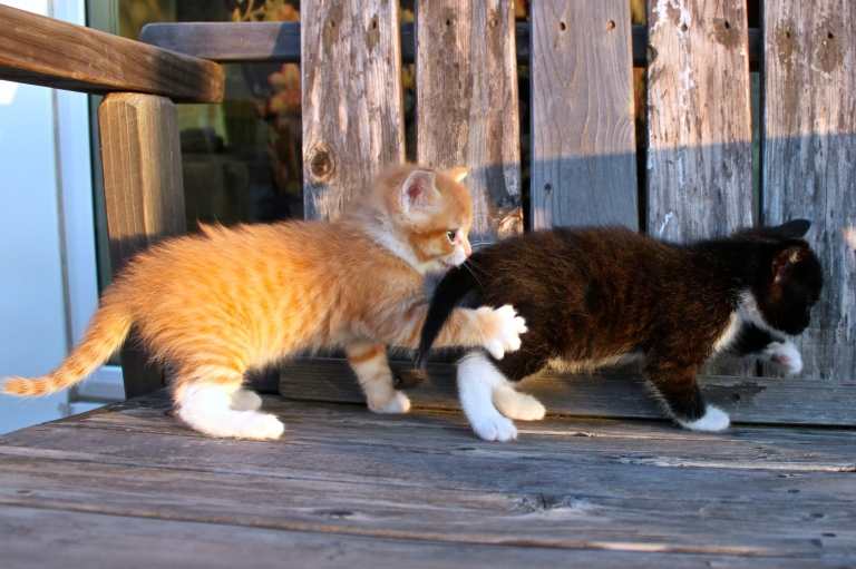summer-2016-kittens-31