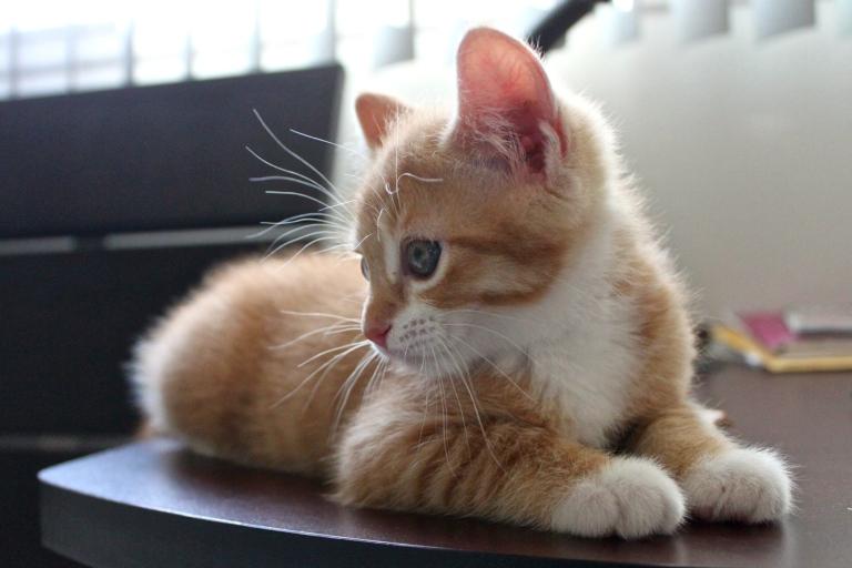 summer-2016-kittens-6