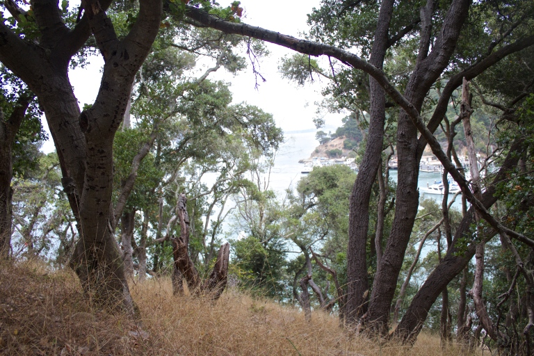 angel island aug 27 2016-3