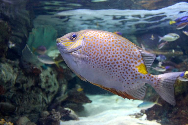 aquarium of the pacific 2015-1