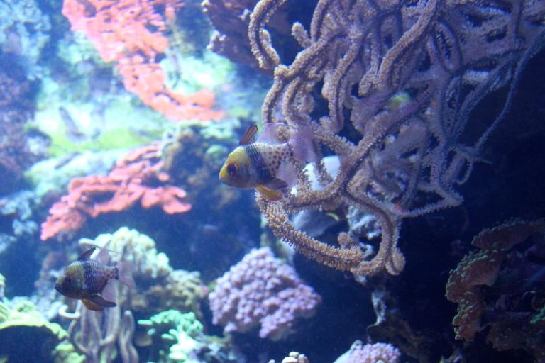 aquarium of the pacific 2015-2