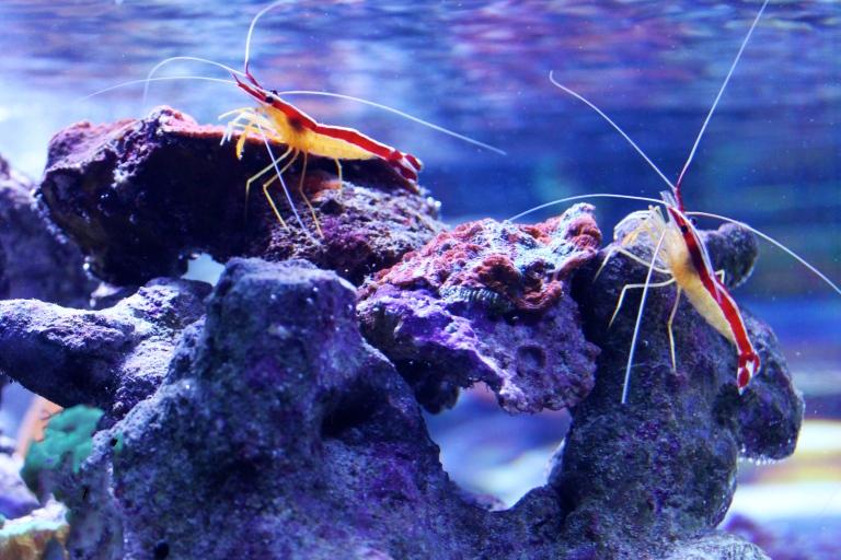 aquarium of the pacific 2015-3