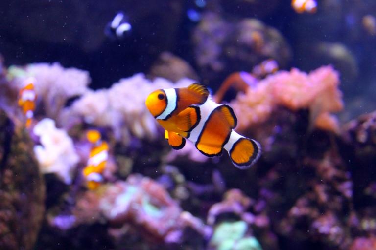 aquarium of the pacific 2015-4