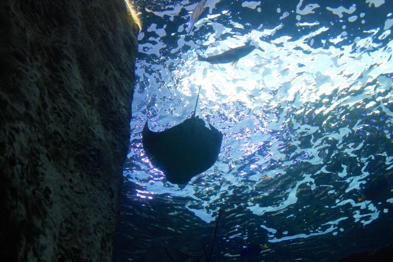 aquarium of the pacific 2015-6