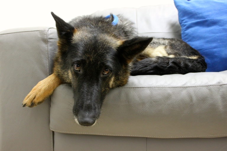 priceless pets may 2016-3
